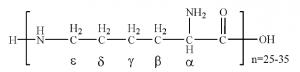 ε-poly-L-lysine chemical structure
