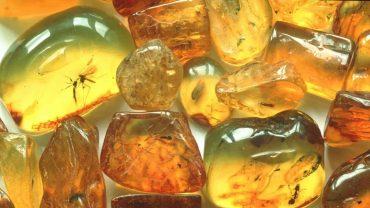 succinic acid in amber