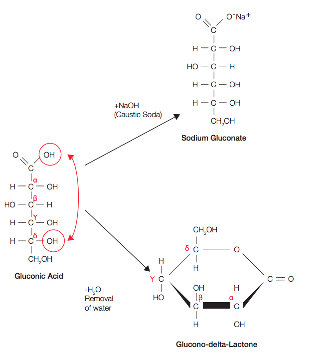 gluconic acid and GDL equilibrium and relationship with sodium gluconate