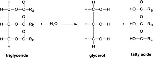 triglycerides hydrolysis